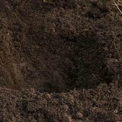 Посадка астильбы и уход в открытом грунте, выращивание и размножение цветка,популярные виды и сорта с названиями и фото