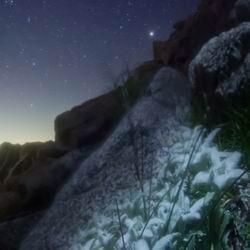 Цветок альпийский эдельвейс: виды, выращивание из семян, леонтоподиум фото в природе