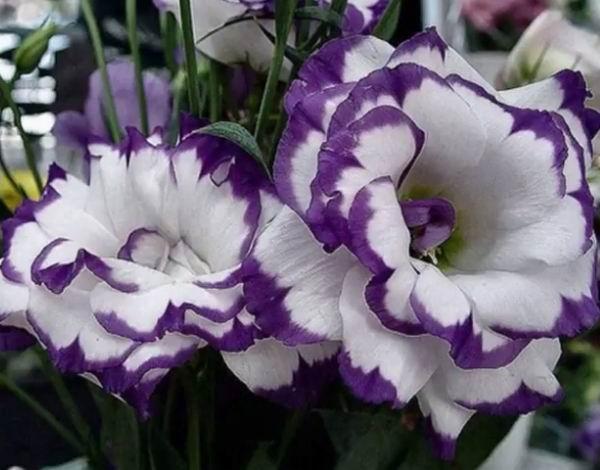 Цветы как розы, но не розы — как называются