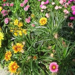 газания и сочетание цветов